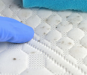 Carpet Mould Removal Mississauga